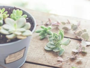 観葉植物は香りも楽しめる!香りから選ぶおすすめの観葉植物7種